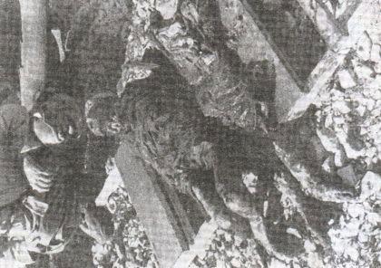 Ексхумирани лешеви у логору Слана на Пагу приjе спаљивања. Талиjанска фотографиjа из септембра 1941.