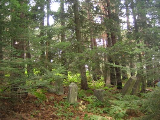 Слика 1. Стање српског војничког гробља које никад није одржавано