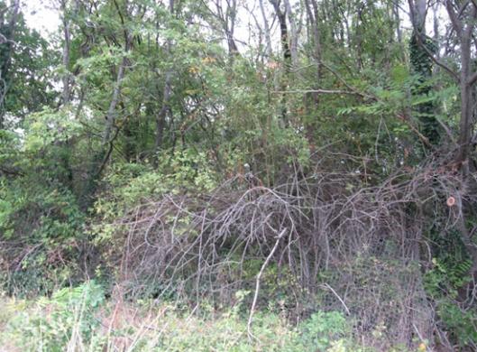 Слика 6. Поглед на гробље из друге позиције, види се ограда од жице – Локација Скочивир