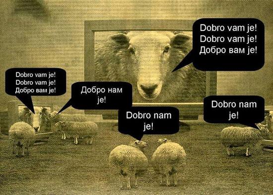 ovce-ljbn
